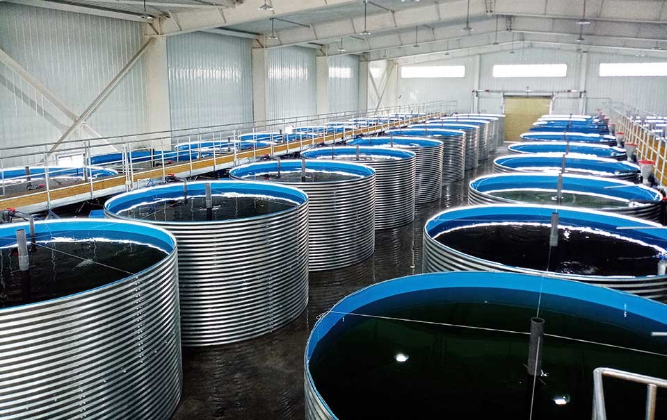 Yadong Salmon Health Cultivation Project in Yadong County, Tibet